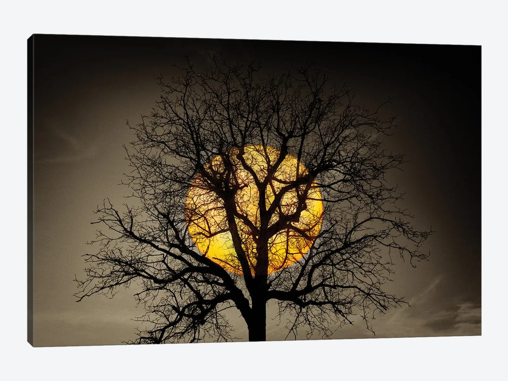 Sunset Over the Tree by Marco Carmassi 1-piece Art Print