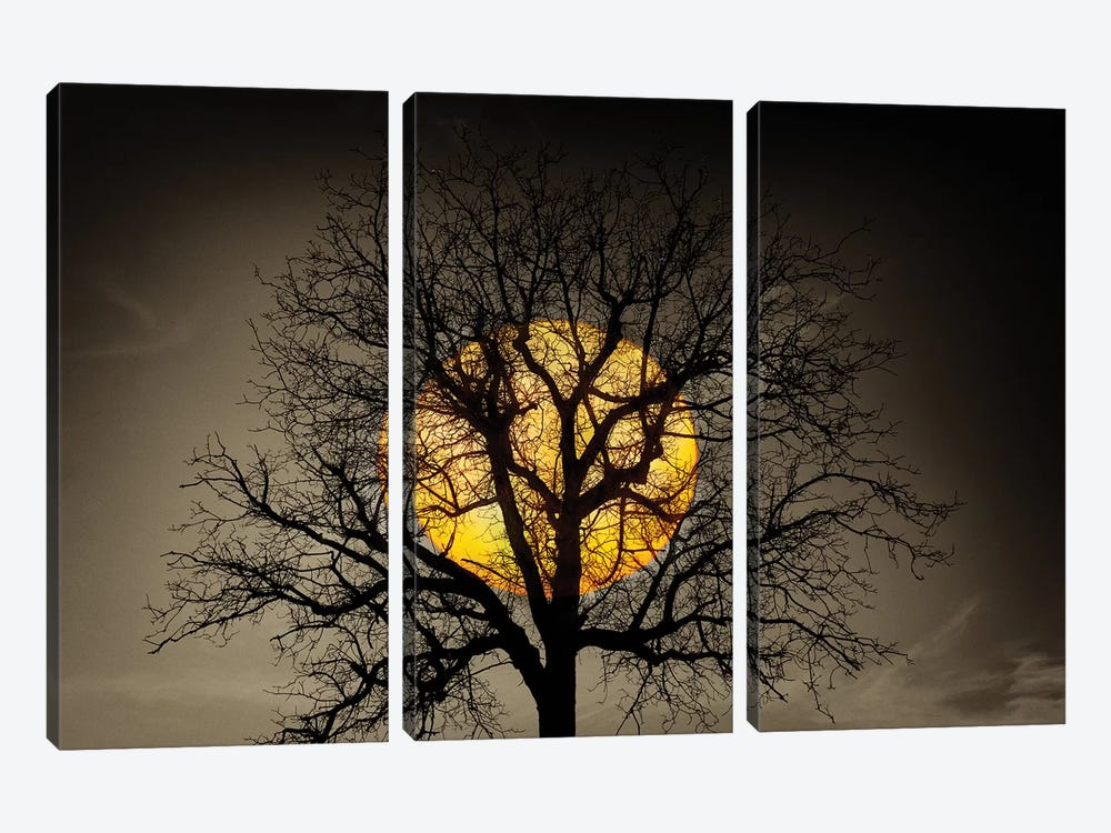 Sunset Over the Tree by Marco Carmassi 3-piece Canvas Print