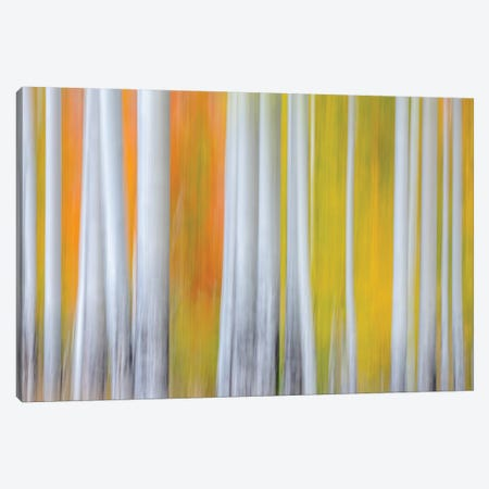 The Birches Canvas Print #MAO217} by Marco Carmassi Canvas Print