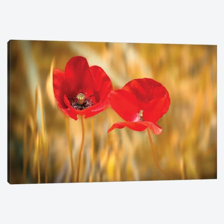 Twins Poppies Canvas Print #MAO220} by Marco Carmassi Art Print
