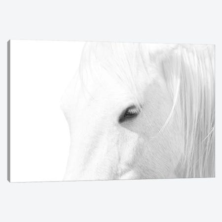 White Horse Canvas Print #MAO221} by Marco Carmassi Canvas Art Print