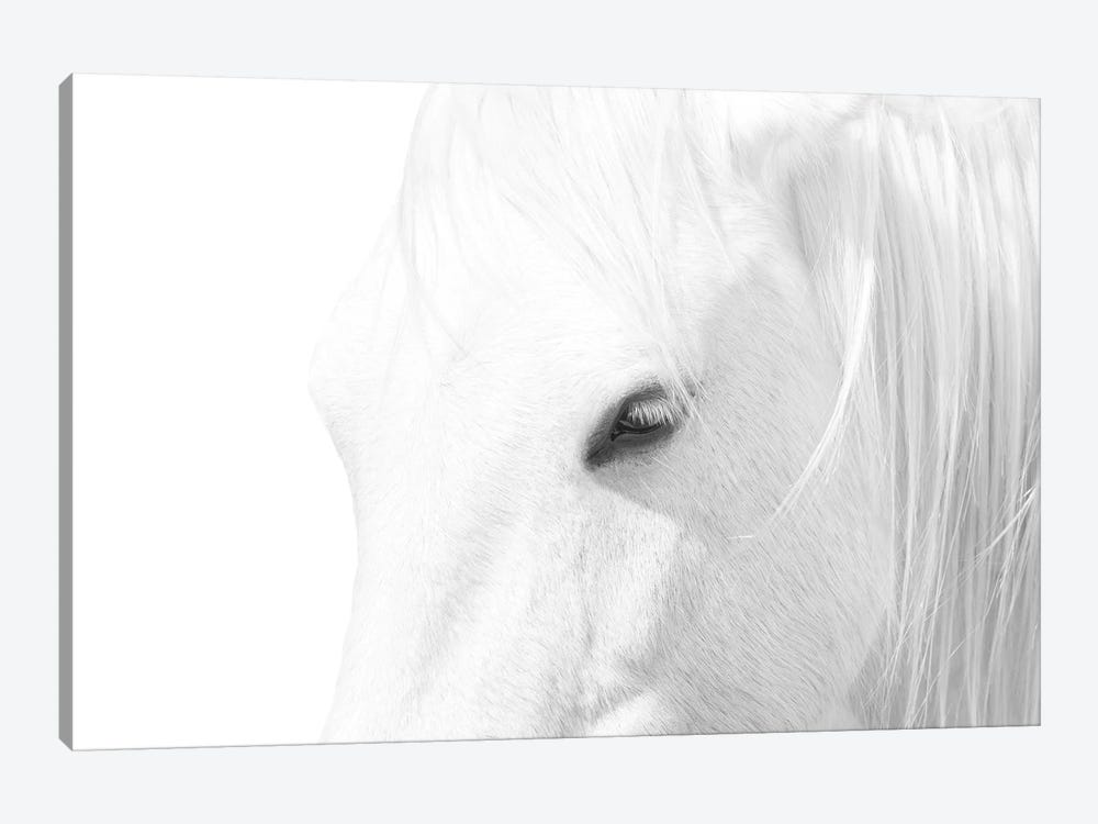 White Horse by Marco Carmassi 1-piece Art Print