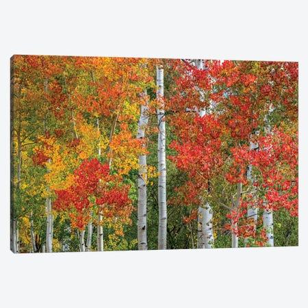Colorado Autumn Canvas Print #MAO226} by Marco Carmassi Canvas Art