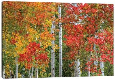 Colorado Autumn Canvas Art Print