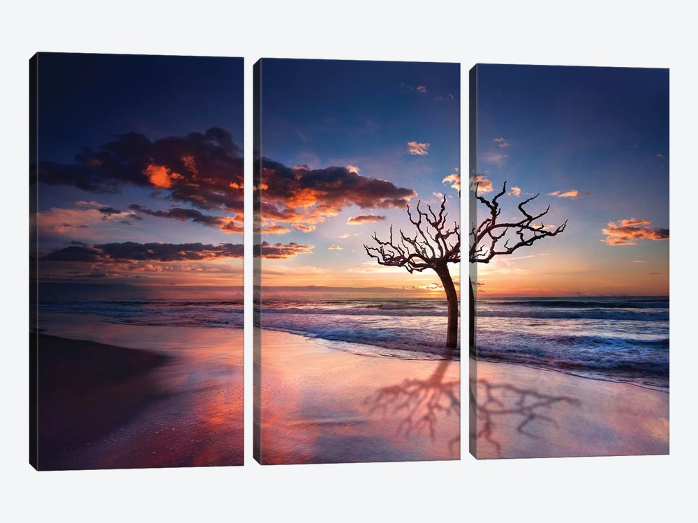 Tree In The Sea by Marco Carmassi 3-piece Canvas Print