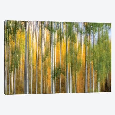 Telluride Autumn Canvas Print #MAO233} by Marco Carmassi Canvas Wall Art