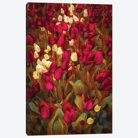 Tulips Canvas Print #MAO28} by Marco Carmassi Canvas Wall Art