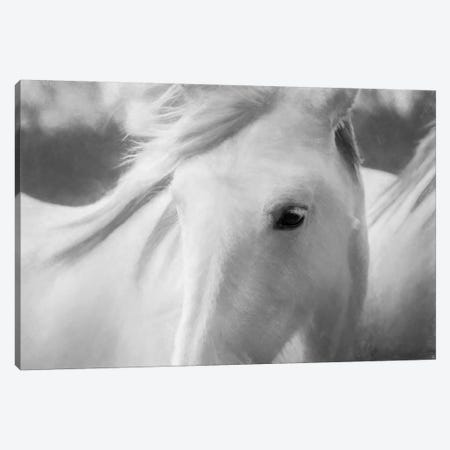 Sweet Horse Canvas Print #MAO29} by Marco Carmassi Canvas Art