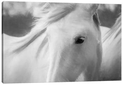 Sweet Horse Canvas Art Print