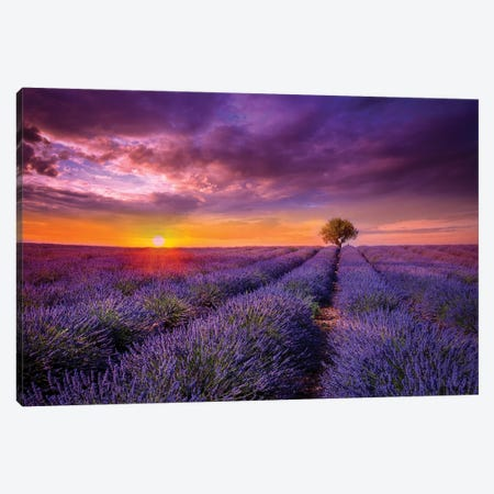 Lavender At Sunset Canvas Print #MAO41} by Marco Carmassi Canvas Wall Art