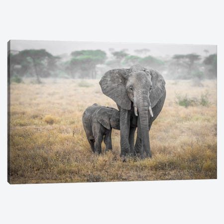 Serengeti Breakfast Time Canvas Print #MAO52} by Marco Carmassi Canvas Art Print
