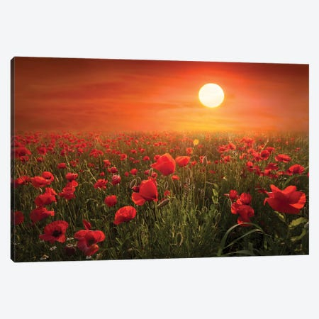 Poppies Canvas Print #MAO64} by Marco Carmassi Art Print