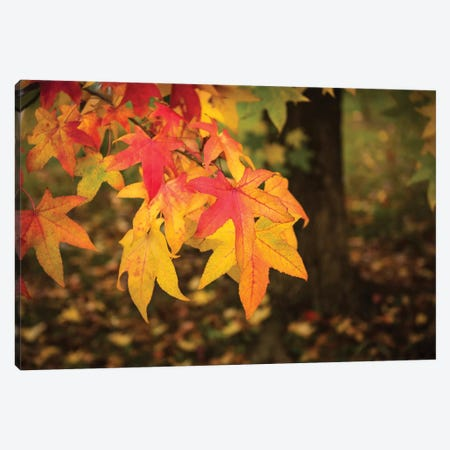 Warm Autumn Canvas Print #MAO73} by Marco Carmassi Canvas Art Print