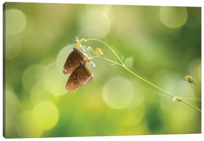 Twin Butterfly Canvas Art Print