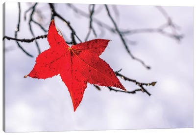 Red Leaf Canvas Art Print