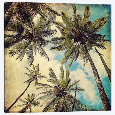 Kauai Island Palms Canvas Print #MAP4} by Melanie Alexandra Price Canvas Print