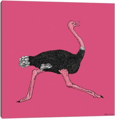 Ostrich Canvas Art Print