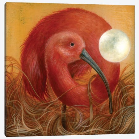 Ibis Moon Canvas Print #MAY58} by Dan May Canvas Art Print