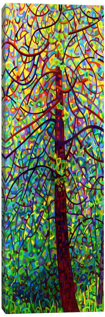 Kaleidoscope Canvas Print #MBD10