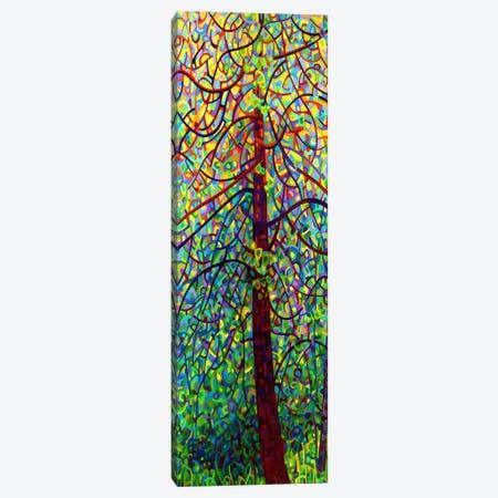 Kaleidoscope Canvas Print #MBD10} by Mandy Budan Canvas Art