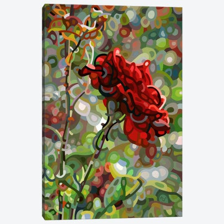 Last Rose of Summer Canvas Print #MBD11} by Mandy Budan Canvas Wall Art