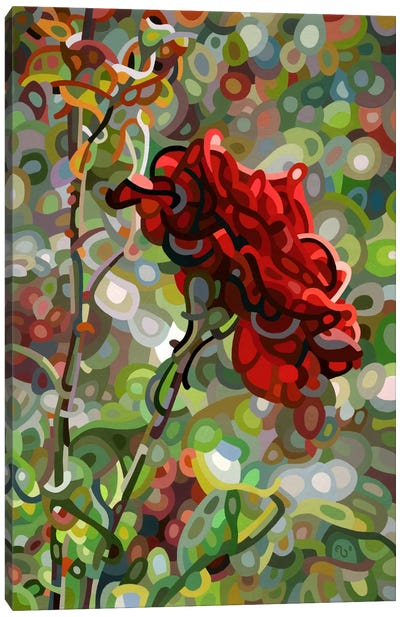 Last Rose of Summer Canvas Art Print