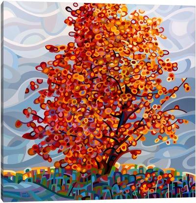 Stormlight Canvas Print #MBD18
