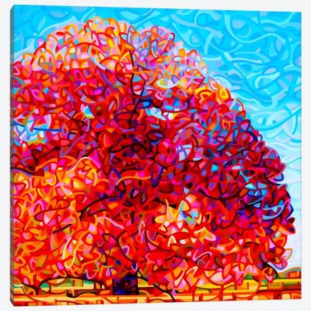 Buddha Tree Canvas Print #MBD27} by Mandy Budan Canvas Art