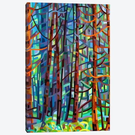 In a Pine Forest Canvas Print #MBD8} by Mandy Budan Canvas Art