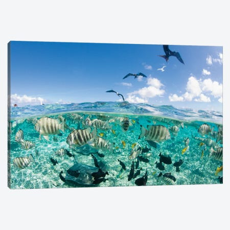 Underwater View, French Polynesia Canvas Print #MBE1} by Michele Benoy Westmorland Canvas Art Print