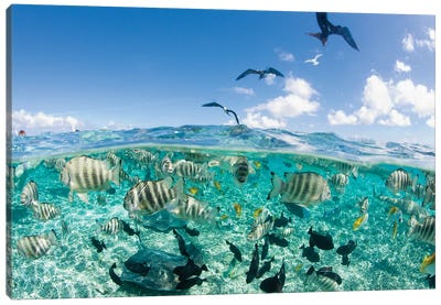 Underwater View, French Polynesia Canvas Art Print