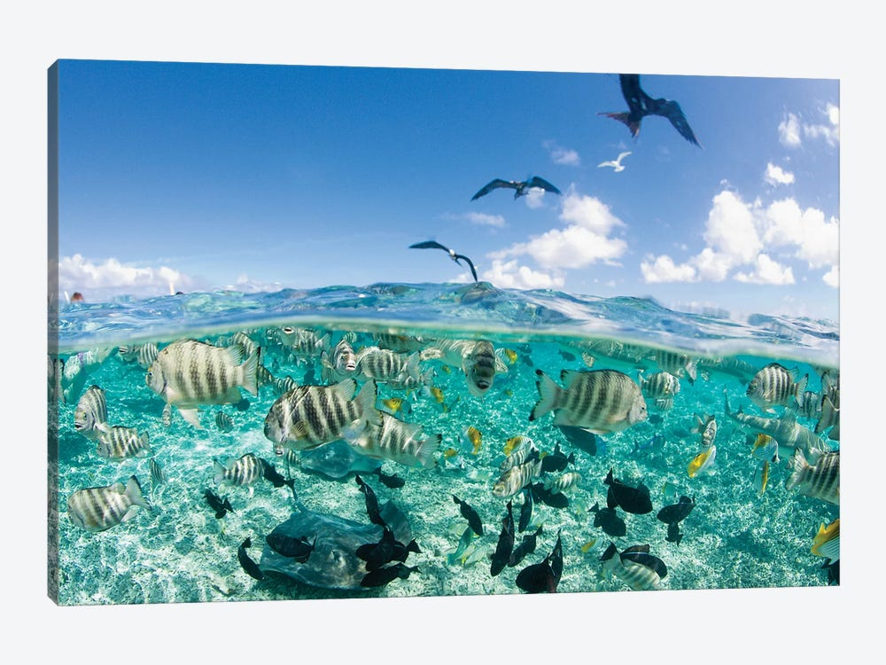 Underwater View, French Polynesia 1-piece Canvas Art Print