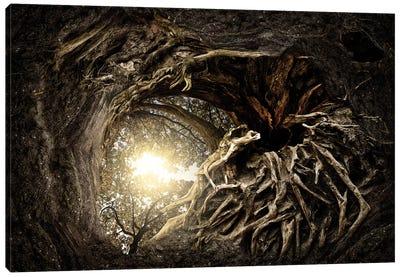 Under The Trees #1 Canvas Art Print