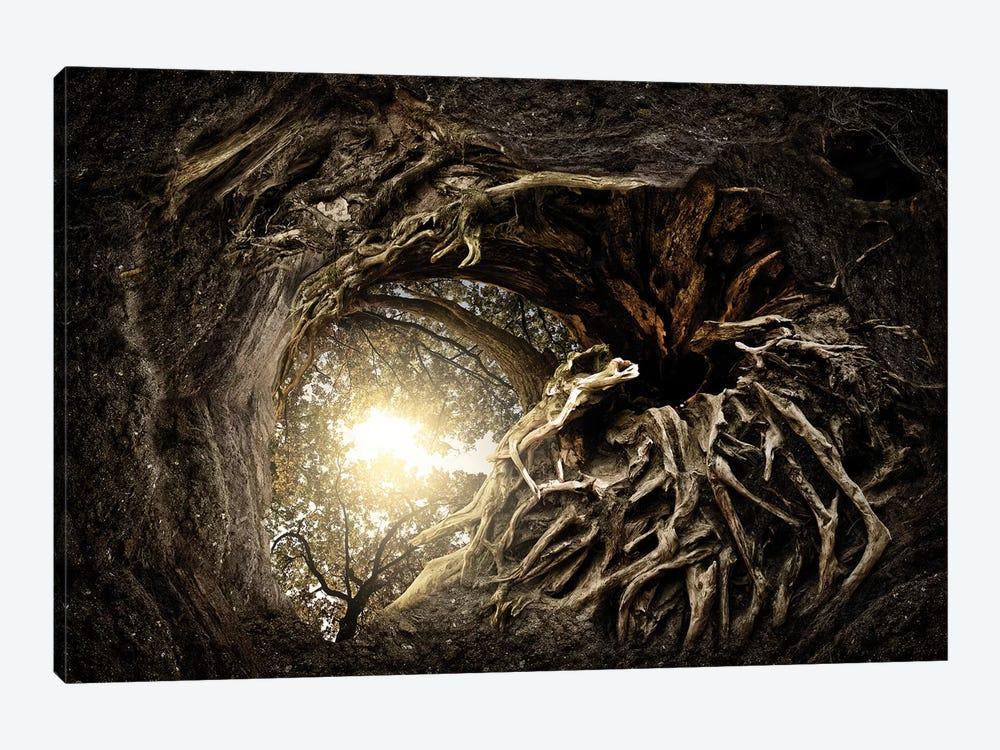 Under The Trees #1 by Matthias Bergolth 1-piece Canvas Art Print