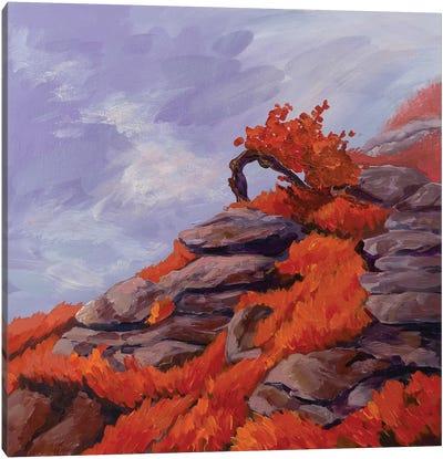 A Tree On A Rock Canvas Art Print