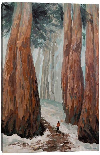Other Redwoods Canvas Art Print