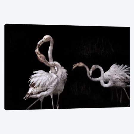 Tango And Flamingos Canvas Print #MBZ4} by Martine Benezech Canvas Wall Art