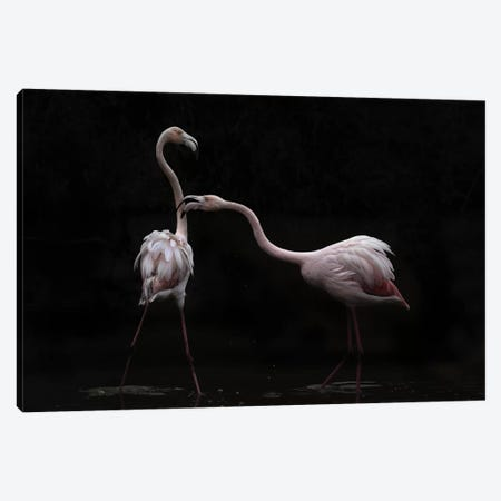 Not All Is Rosy Canvas Print #MBZ5} by Martine Benezech Canvas Wall Art