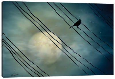 Pássaro ao Luar (Bird Moonlight) Canvas Art Print
