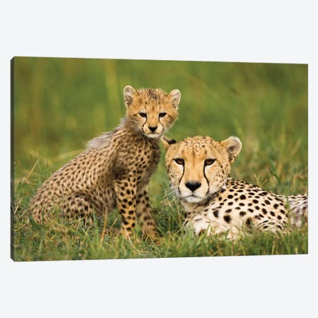 Cheetah, Acinonyx Jubatus, With Cub In The Masai Mara Gr, Kenya. Canvas Print #MCD2} by Joe & Mary Ann McDonald Canvas Print