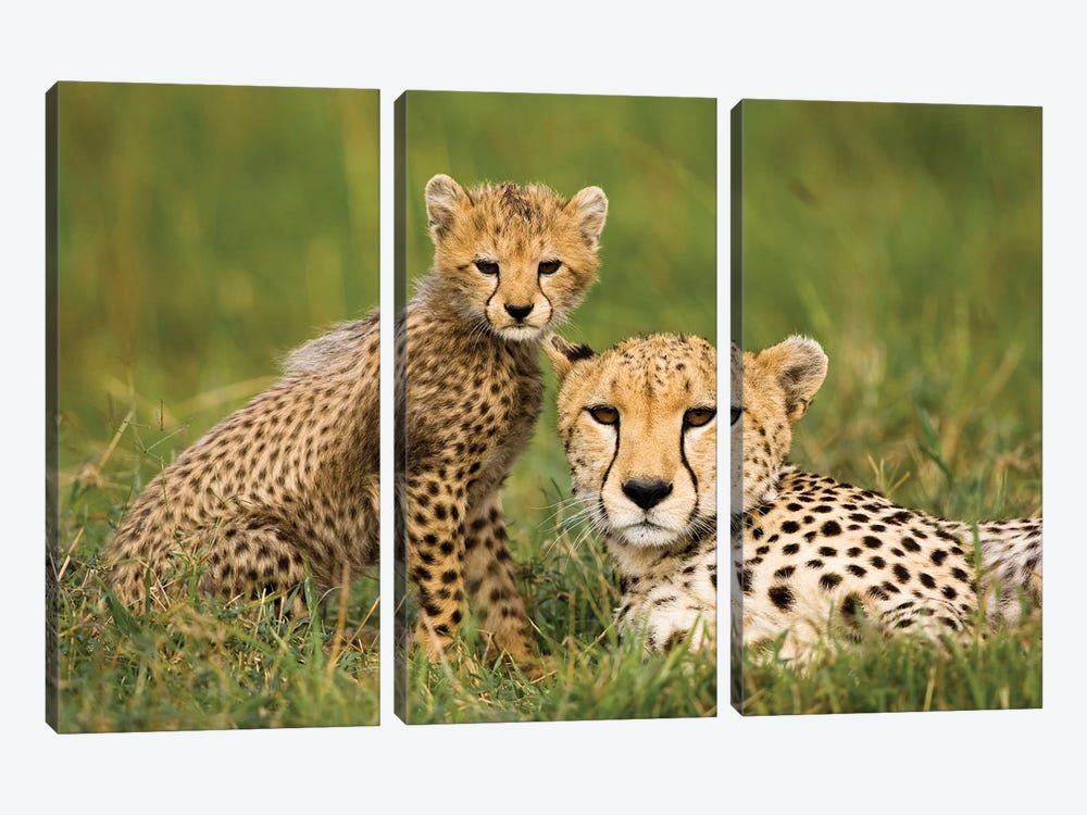 Cheetah, Acinonyx Jubatus, With Cub In The Masai Mara Gr, Kenya. by Joe & Mary Ann McDonald 3-piece Canvas Wall Art