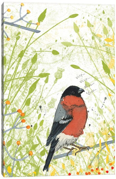 Bullfinch Canvas Art Print