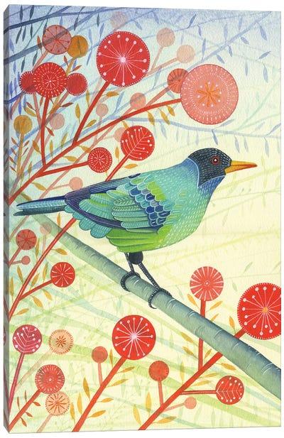 Green Honeycreeper Canvas Art Print