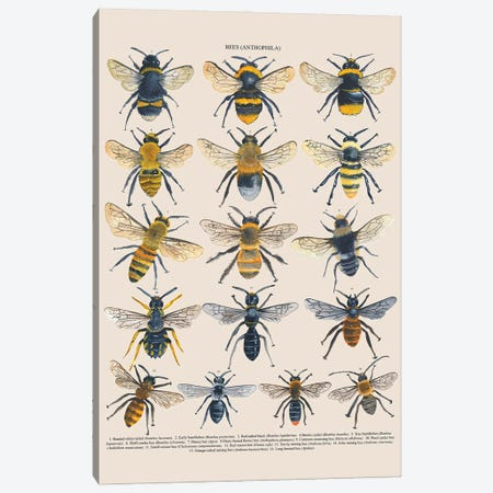 Bees Canvas Print #MCE45} by Michelle Campbell Canvas Wall Art