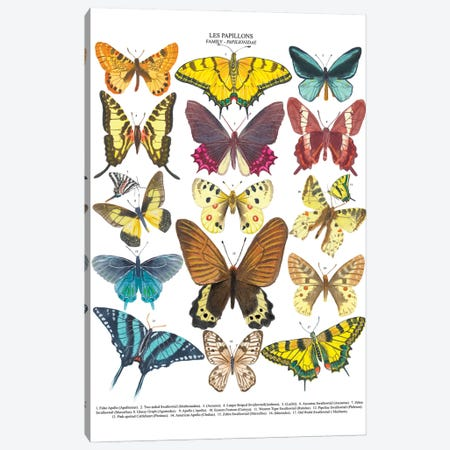 Butterflies Canvas Print #MCE48} by Michelle Campbell Canvas Art Print