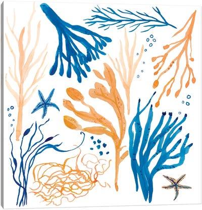 Seaweed Coastal Canvas Art Print