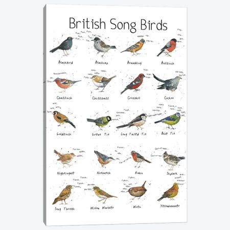 British Song Birds Canvas Print #MCE7} by Michelle Campbell Art Print