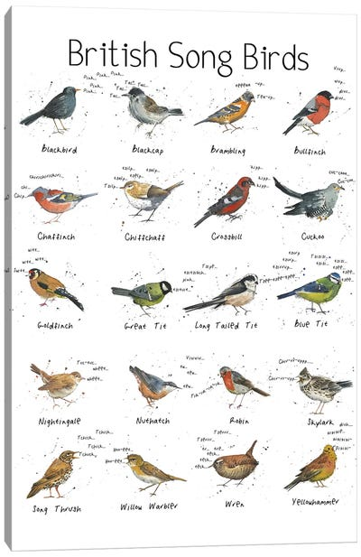 British Song Birds Canvas Art Print