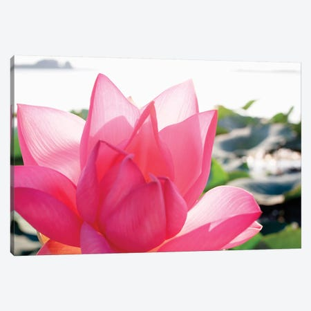 Close-Up Of A Lotus Flower In Full Bloom Canvas Print #MCH1} by Michele Molinari Canvas Print