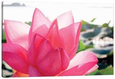 Close-Up Of A Lotus Flower In Full Bloom Canvas Art Print